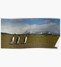 King Penguins marching Poster