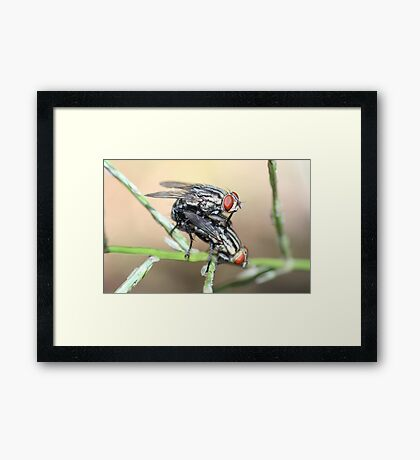 No Flies On Me Framed Print