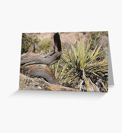 Natural Still Life Greeting Card