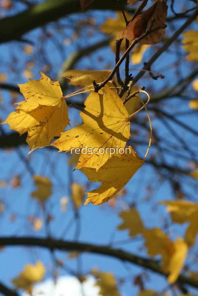 Canadian Fall by redscorpion