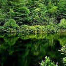....GREEN REFLECTIONS by RoseMarie747