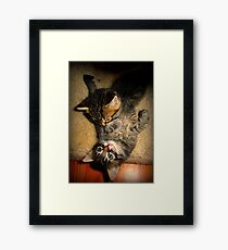 Two Beautiful Kittens Playing with Eachother Framed Print