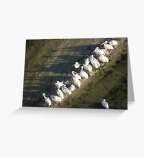 White Pelicans in the Indian River Lagoon Greeting Card