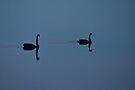 Black Swans by Paul McSherry