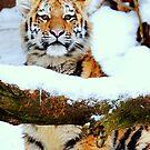 My cherie Amur by Alan Mattison