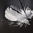 Light as a white feather by Javimage