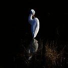 Giant Egret Evening Light Reflections by Deborah  Benoit