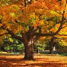 Autumn Colours 6 - MacKenzie-King Estate by Yannik Hay