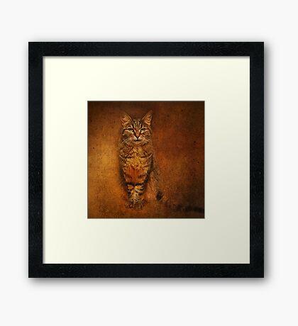 I sold the dog on ebay! Framed Print