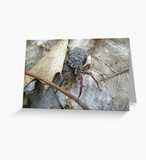 Wolf Spider (Lycosidae) with Egg Sack and Spiderlings Greeting Card
