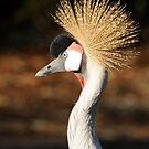 Gray Eyed Golden Crown Profile by Joe Jennelle