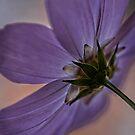 Under Purple by Dianne English