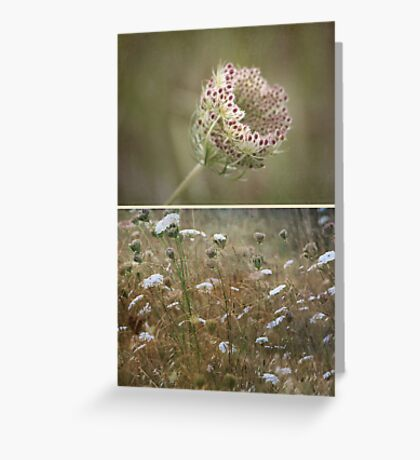 ~ Wild Beauty-Queen Annes Lace ~ Greeting Card