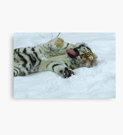 Ahh!  Now That Feels Good (Amur Tiger) Canvas Print