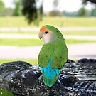 Beauregard at the fountain by Heidi Mooney-Hill