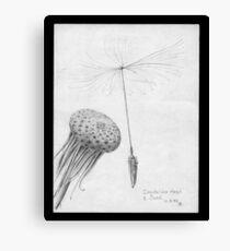 Dandelion head and seed (macro pencil sketch 1959) Canvas Print