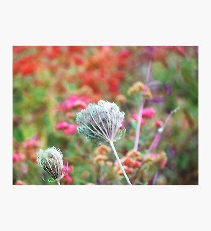 Fall Grass 3 Photographic Print