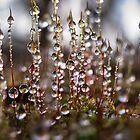 Mossy Diamonds by Ann Garrett