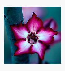 Little Wonder Photographic Print