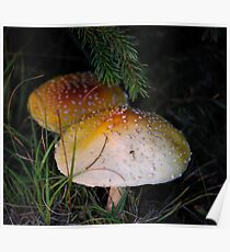 Mushrooms under the Pine Poster