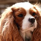 My Sweet Isabella by daphsam