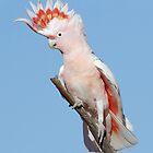 Birds of Australia - Simon Bennett by Simon Bennett