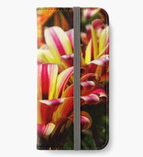 Gazania iPhone Wallet/Case/Skin