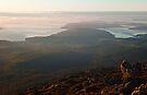 Looking south from Mt Wellington, Hobart, Tasmania by Odille Esmonde-Morgan