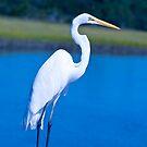 Great White Egret in Formalware by Joe Jennelle