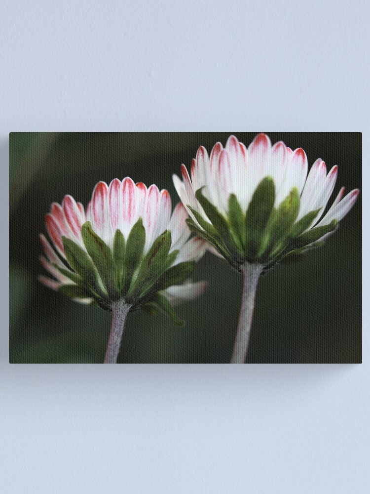 Alternate view of Bellis sylvestris Canvas Print