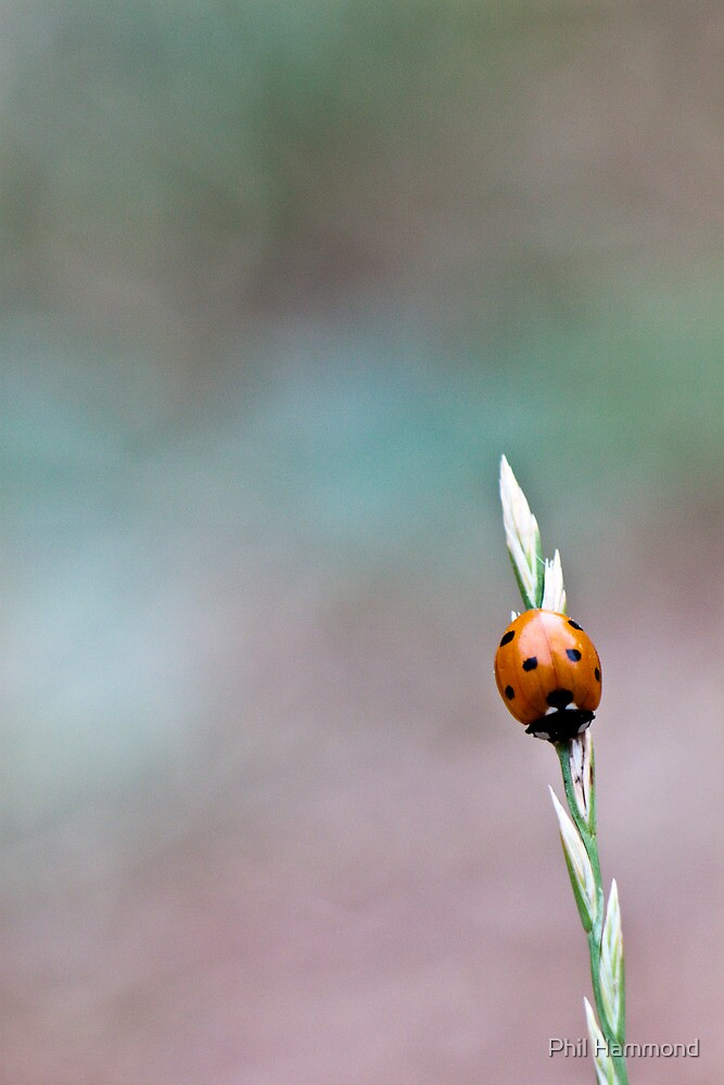 Lonely at the top... by Phil Hammond
