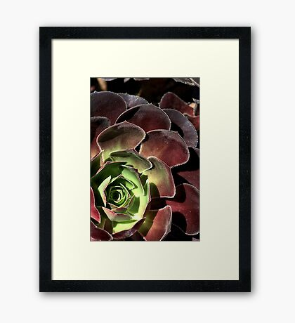 Going Cactus  Framed Print