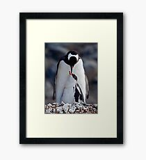 Lullaby (Gentoo Penguin & Chick, Port Lockroy, Antarctica) Framed Print