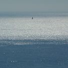Sailboat on the Silver Seas  by Fay  Hughes