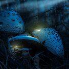 Mushrooms by fos4o