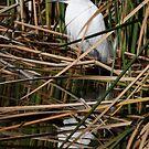 Hiding In The Reeds by Deborah  Benoit