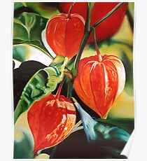 """Chinese Lanterns"" - cape gooseberry Poster"