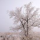 Frozen Ground by Chad Dutson