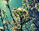 Tree Buds by FrankieCat