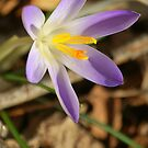 spring is coming by Tracey Hampton