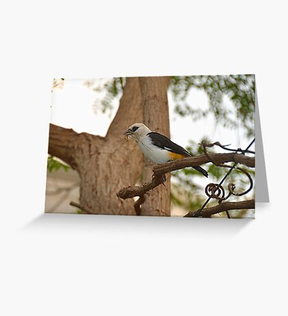 Time To Nest Greeting Card