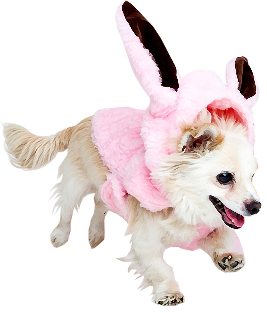 """Easter can come! Dog """"Dio"""" in the rabbit-Kotüm :) - Faith and truth by GundW"""