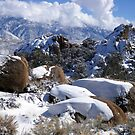 White Mountains And Boulders by marilyn diaz