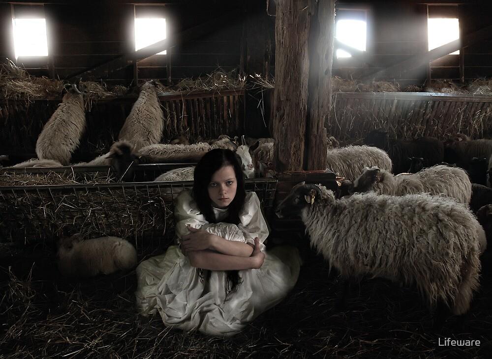 All sheep by Lifeware