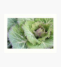Fall Brassica Art Print