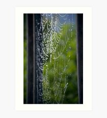 Spider Web Dew Art Print