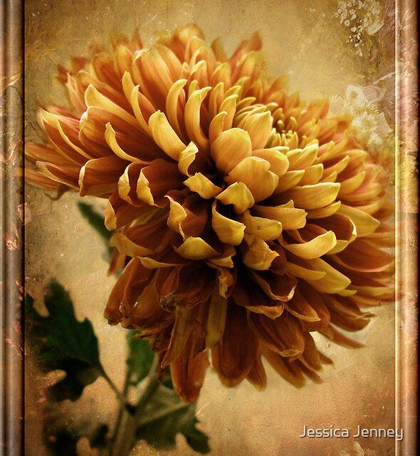 Vintage Chrysanthemum by Jessica Jenney