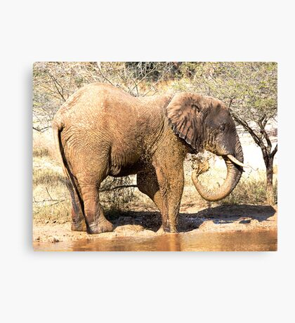 Mud Bath Canvas Print