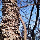 Where's the Tree? by Charldia