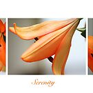 Serinty collage by Julia Goss